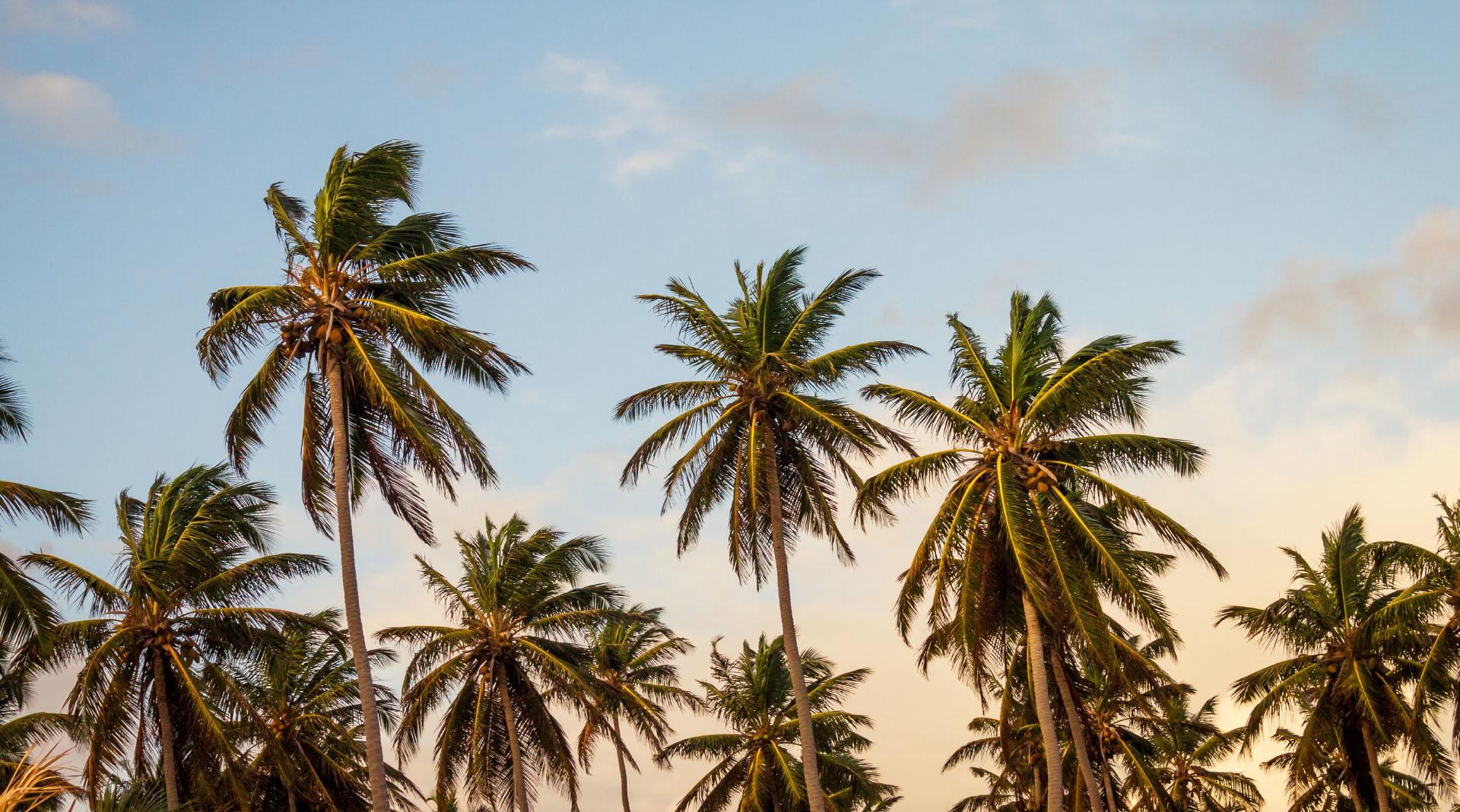 Wholefoods coconut oil