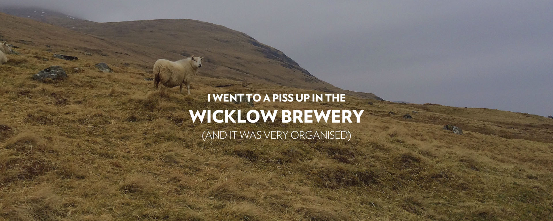Wicklow Brewery Tone of Voice. Sweet is a food packaging, communications and graphic design agency that can help you grow your brand.