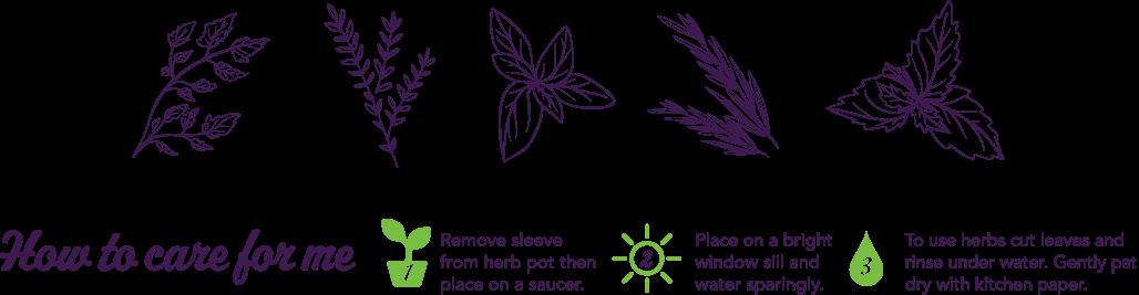 Illustrations for Grá herb packaging.